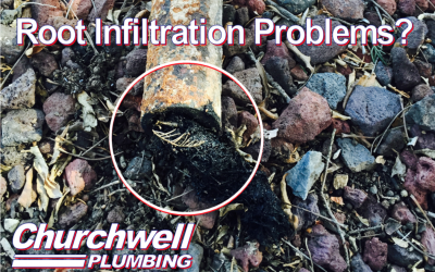 Root Infiltration